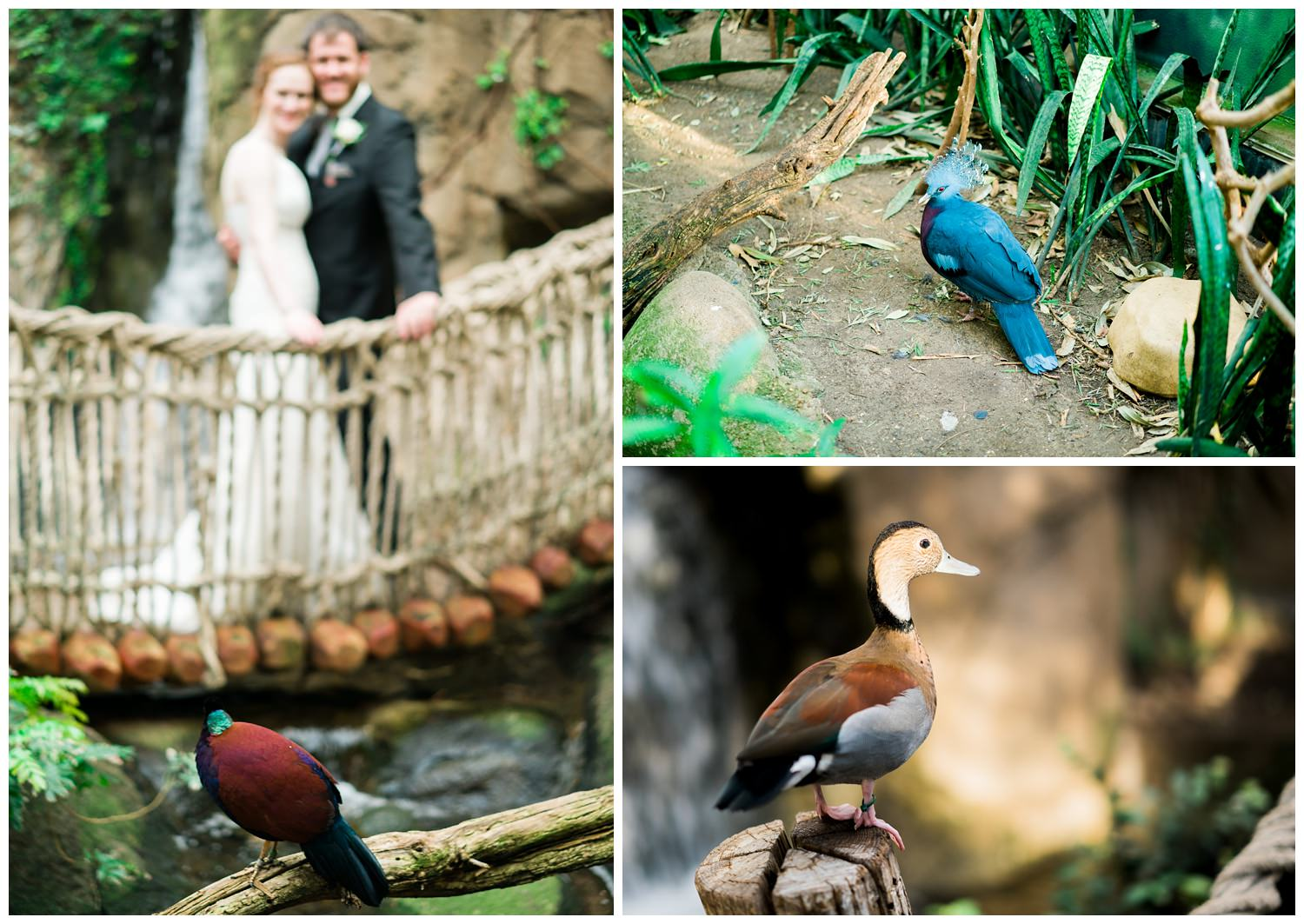 blank park zoo wedding birds